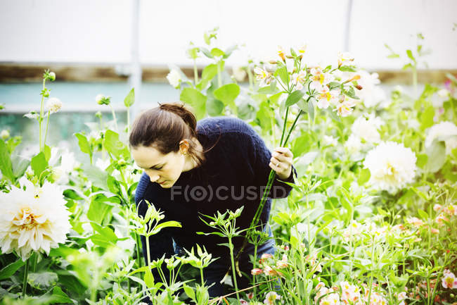 Woman working in organic flower nursery. — Stock Photo