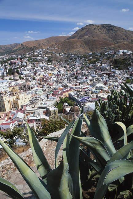 Висока кут зору алое рослин і дахи будинків міста Гуанахуато, Мексика. — стокове фото