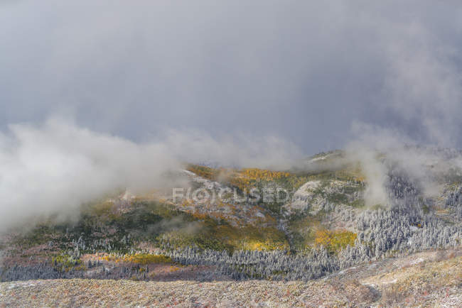 Landscape of Uinta National Forest in autumnal foliage with fog clouds. — Stock Photo