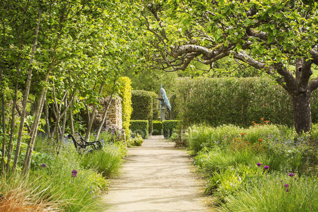 Path in garden with trees in blossoms and hedge and peacock perched on sundial. — Stock Photo