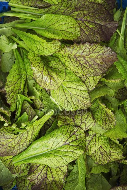 Bunch of fresh edible leaves for kitchen. — Stock Photo