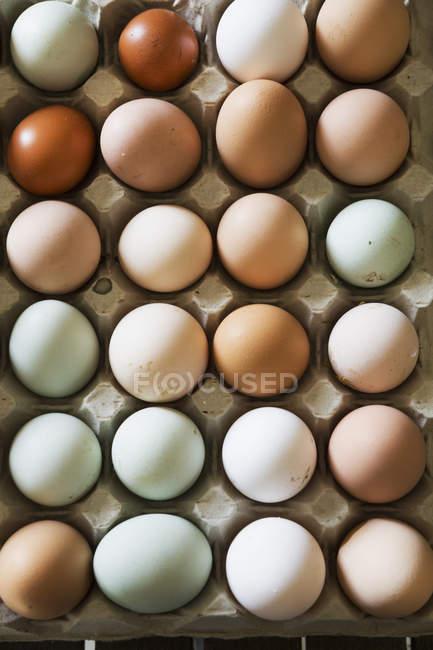 Лоток для свежих органических яиц в различных цветах. — стоковое фото