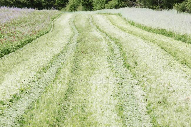 Путь через зеленая трава и цветы в поле — стоковое фото