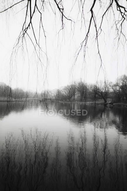 Eau calme du réservoir et reflet des arbres d'hiver à Central Park, New York . — Photo de stock