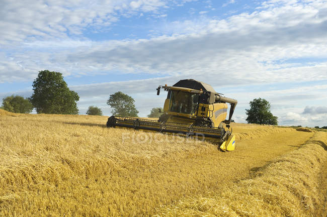 Combine harvester cutting field of corn. — Stock Photo