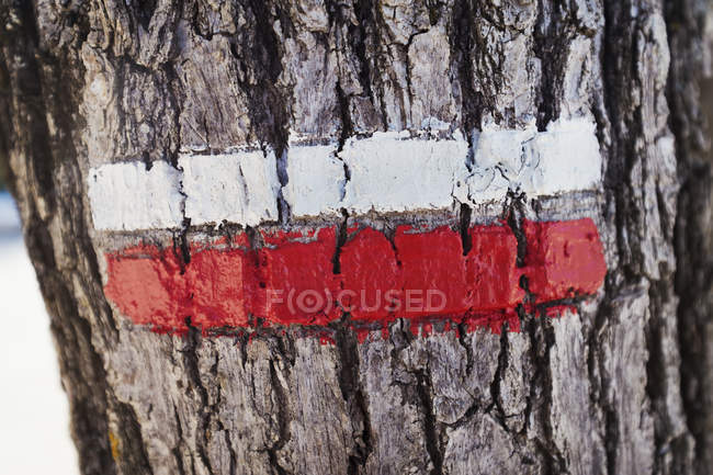 Strips of white and red paints on tree bark. — Stock Photo