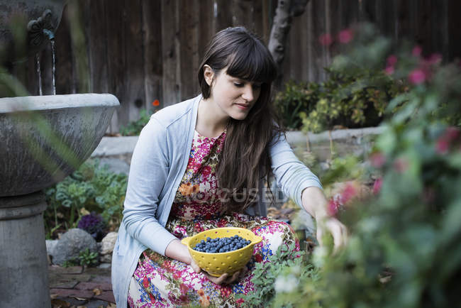 Young woman picking blueberries from plants in garden. — Stock Photo