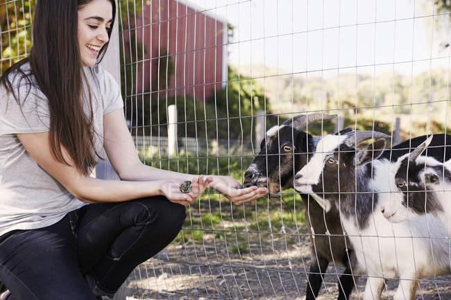 Молодая женщина приседает и кормит коз через проволочный забор . — стоковое фото