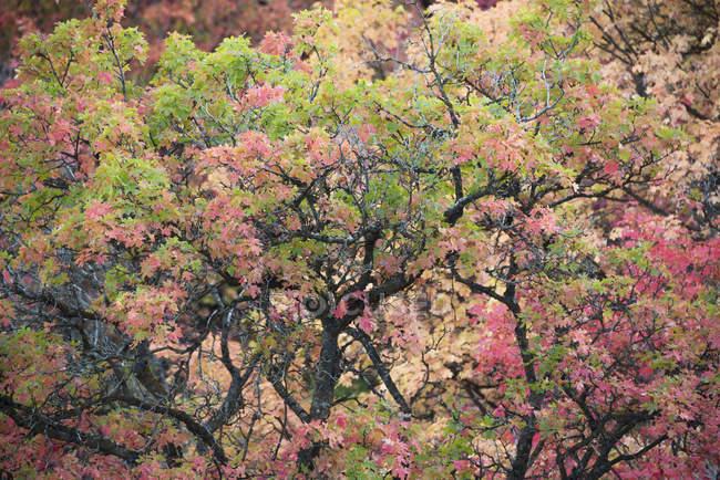 Голые ветви обожженного дерева и яркие листья и осенних цветов — стоковое фото