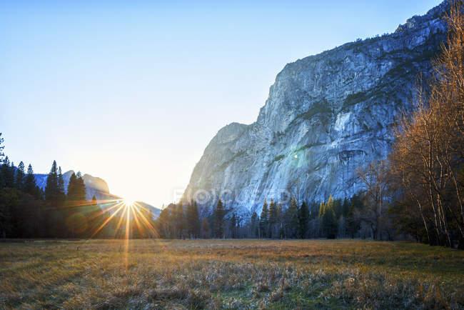Uno scenario suggestivo e valle con ripida scogliera e pino foresta a Parco nazionale Yosemite — Foto stock