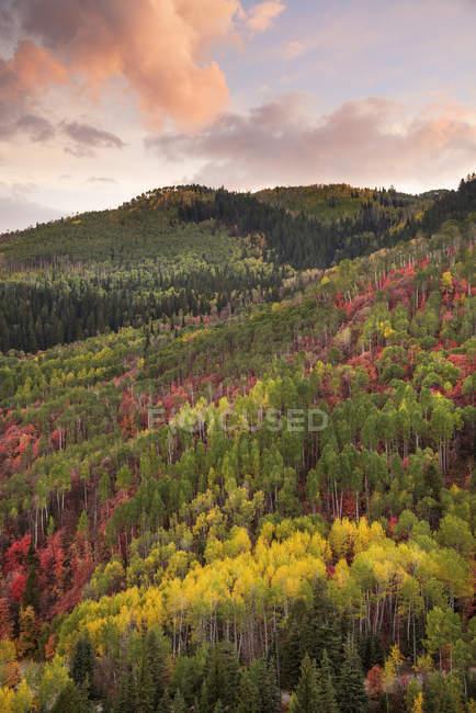 Luftaufnahme der Wald von Ahorn und Aspen in herbstlichen Farben bei Sonnenuntergang. — Stockfoto