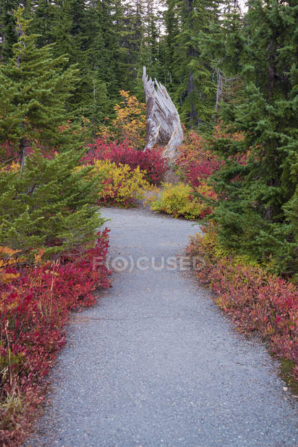 Forest trail through woodland in autumnal red and orange foliage beside path. — Stock Photo