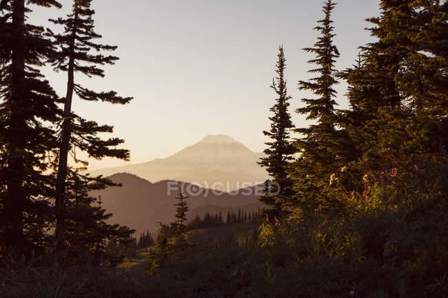 Nadelbäume auf Piste und Mount Hood und Cascade Bergkette in der Abenddämmerung. — Stockfoto