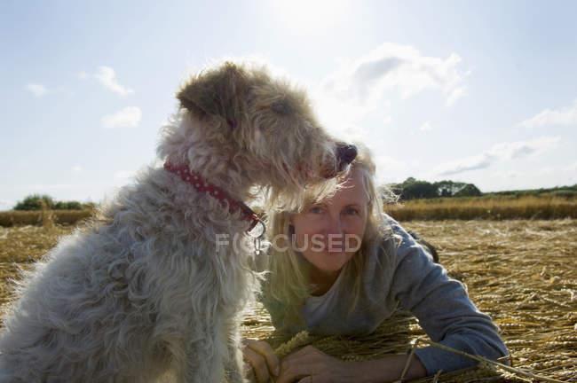 Собака-сидячи і, дивлячись на вид з жінкою, поруч лежали на збирання врожаю. — стокове фото