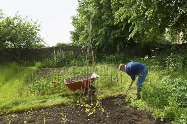 Mature man digging soil while planting seedlings in vegetable garden. — Stock Photo