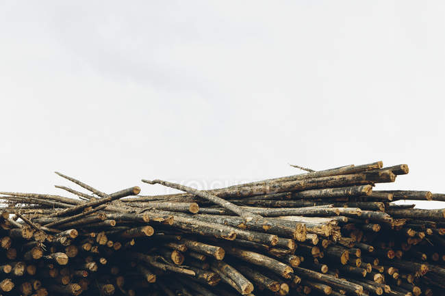 Stack of cut timber logs of pine trees at lumber mill. — Stock Photo