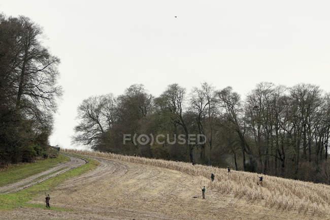 Homens com ostentando armas posicionadas através de campo de trigo, enquanto o faisão disparar. — Fotografia de Stock