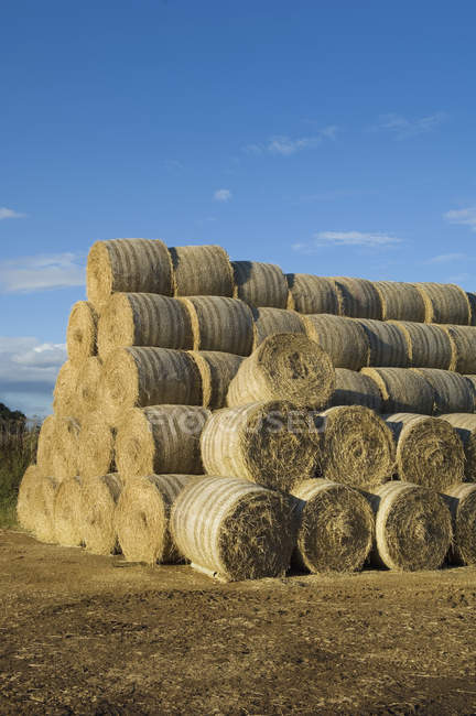 Stacks of round bales of straw in field after harvest. — Stock Photo