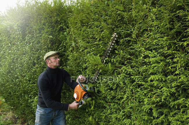 Mature man trimming green hedge with motorized hedge trimmer. — Stock Photo