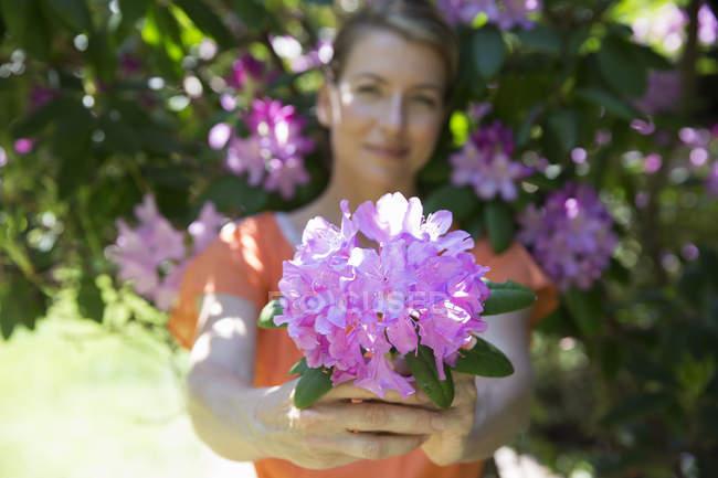 Donna che tiene grandi ortensie viola fiorisce in giardino . — Foto stock