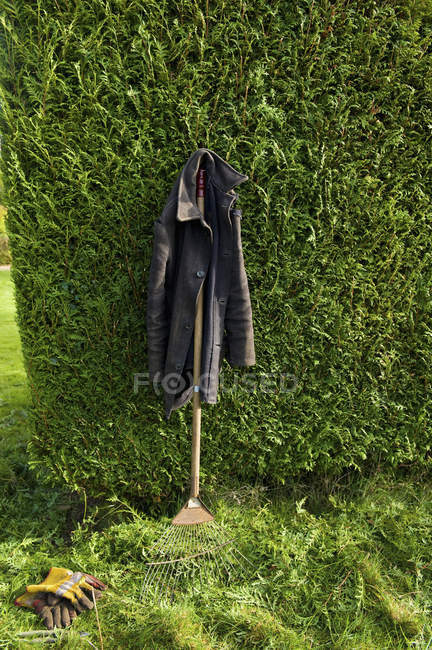 Overcoat hanging from leaf rake leaning against green hedge. — Stock Photo