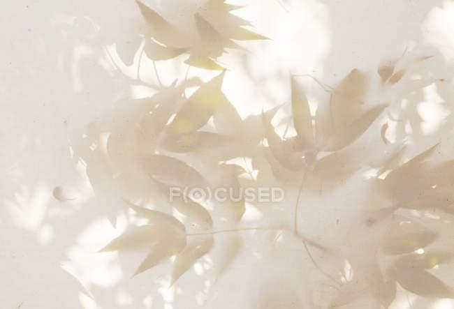 Abstrakte Muster der Blätter auf weiße Leinwand. — Stockfoto