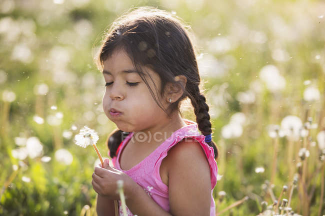 Elementary age girl with braids blowing  fluffy seeds off dandelion in field of flowers. — Stock Photo
