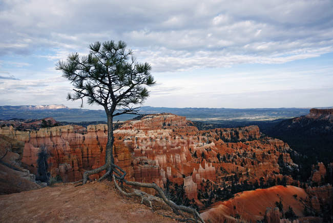 Bryce Canyon and landscape of sandstone rock formations in Utah, USA. — Stock Photo