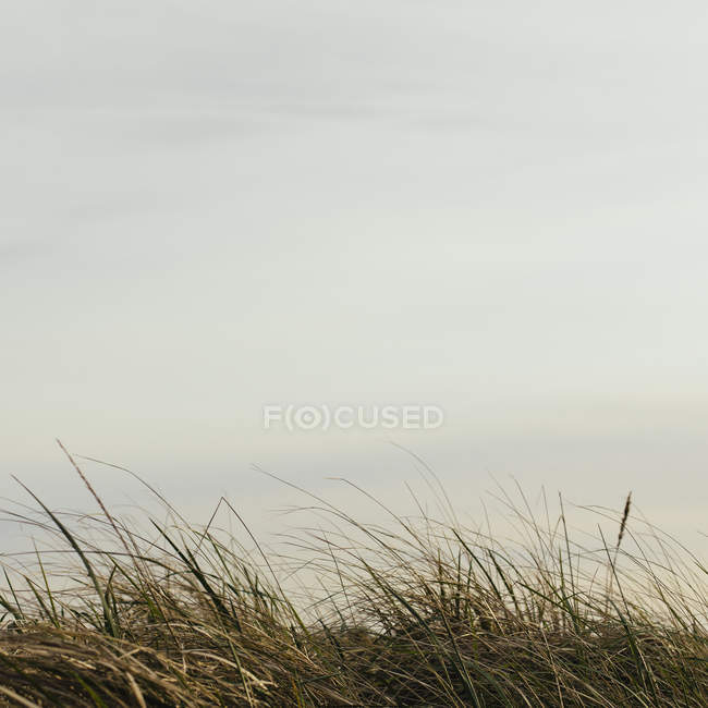 Close-up of coastal grass in natural landscape. — Stock Photo