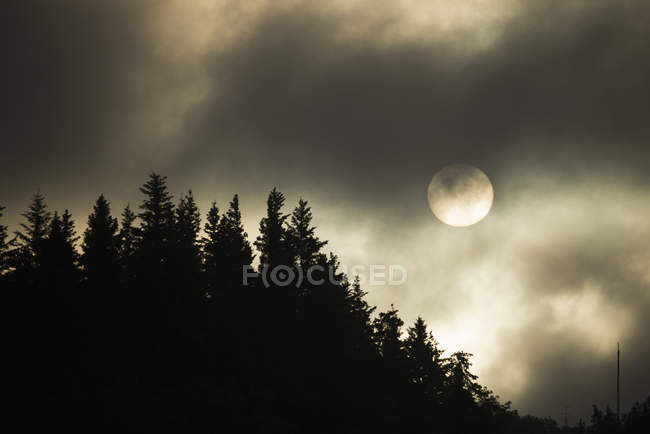 The sun in sky above pine trees shrouded by mist and clouds. — Stock Photo