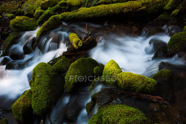 Barnes Creek with water flowing over mossy rocks in Olympic National Park, Washington, USA. — Stock Photo