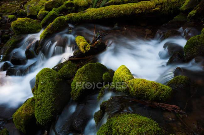 Barnes Creek con agua que fluye sobre rocas musgosas en el Parque Nacional Olímpico, Washington, EE.UU. . - foto de stock