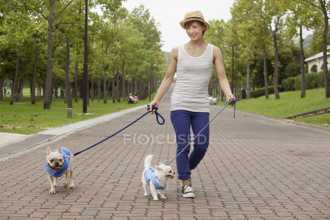 Жінка вигулює дві собаки на проклали шлях у парку. — стокове фото