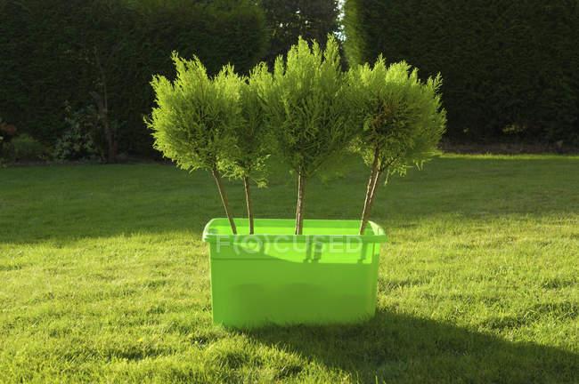 Молодые деревья в зеленой пластиковой коробке стоят на газоне . — стоковое фото