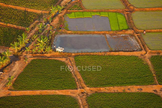 Scène rurale de terres agricoles avec des rizières, Bagan, Birmanie — Photo de stock
