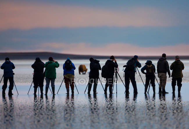 Group of photographers taking pictures of bear on beach at sunset in Lake Clark National Park, Alaska, USA. — Stock Photo