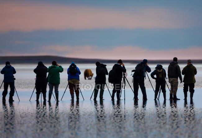 Група фотографів зйомки в ведмідь на пляжі на захід сонця в Національний парк озеро Кларк, Аляска, США. — стокове фото