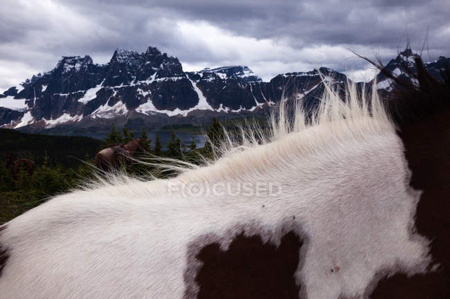 Close-up of wild horse fur with mountains of Jasper National Park, Alberta, Canada — Stock Photo