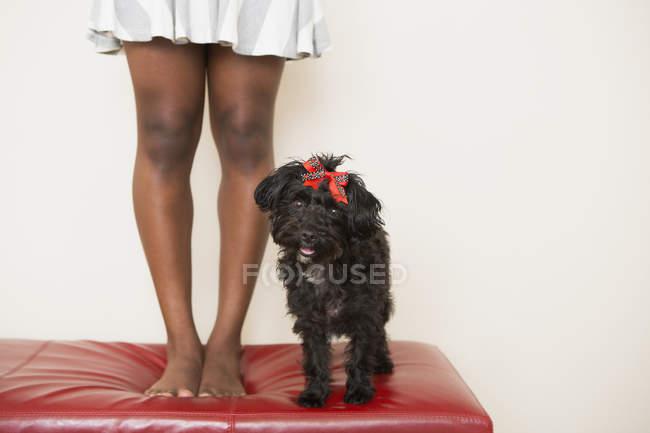 In piedi di piccolo cane nero sulle feci di piedini femminili — Foto stock