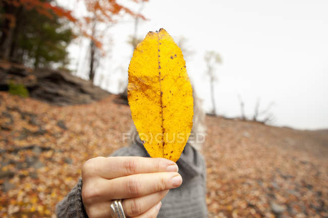Woman holding autumn leaf obscuring her face. — Stock Photo
