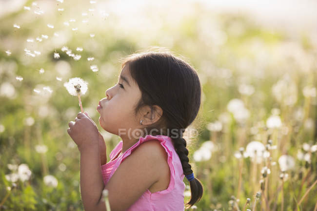 Elementary age girl in field of flowers blowing fluffy seeds off dandelion plant. — Stock Photo