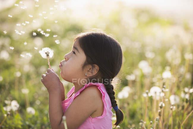 Девушка младшего возраста в поле цветов выбрасывает пушистые семена с одуванчика . — стоковое фото