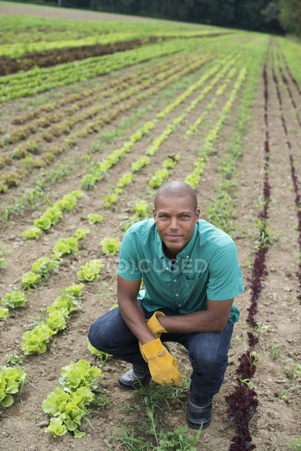 African American crouching man in commercial garden and looking in camera. — Stock Photo