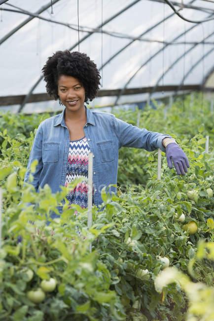 Середині дорослих жінку, що стояли в теплиці з зеленим томатний рослин — стокове фото