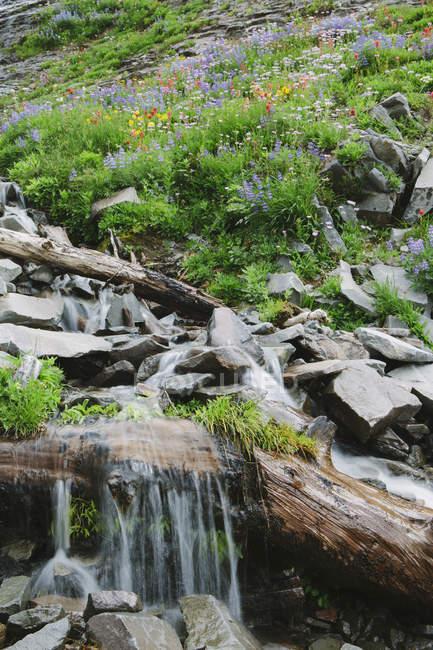 Cachoeira em cascata e flores silvestres florescendo na área da montanha — Fotografia de Stock