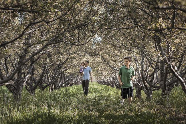 Отец с детьми, гуляющими по лесному туннелю из ветвей деревьев . — стоковое фото