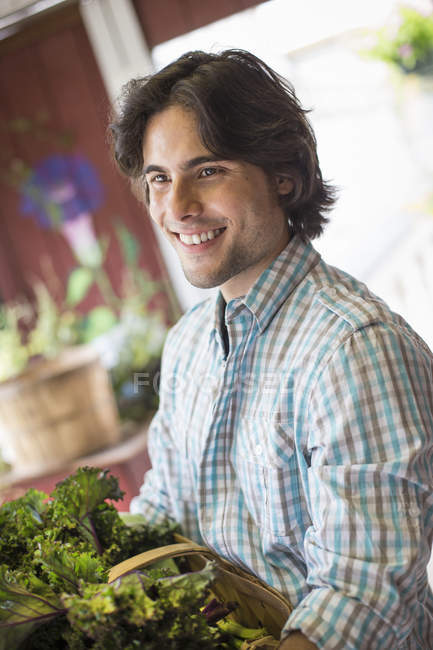 Young man sorting lettuce on organic farm. — Stock Photo