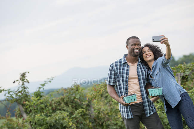 Couple posing for selfie with smartphone while blackberry picking. — Stock Photo