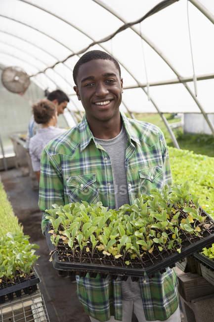 Joven sosteniendo bandejas de plántulas verdes con amigos jardinería en invernadero - foto de stock