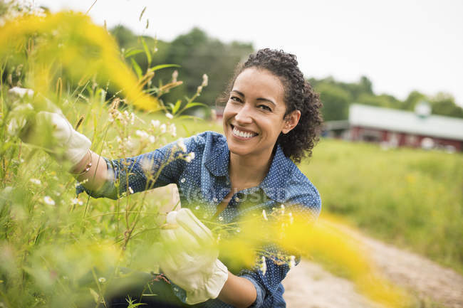 Женщина в перчатках работает с цветущими растениями на органической ферме . — стоковое фото